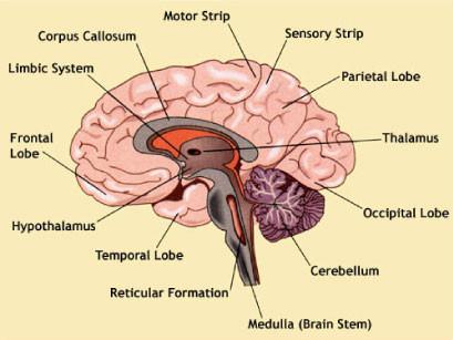 metastatic cancer brain symptoms