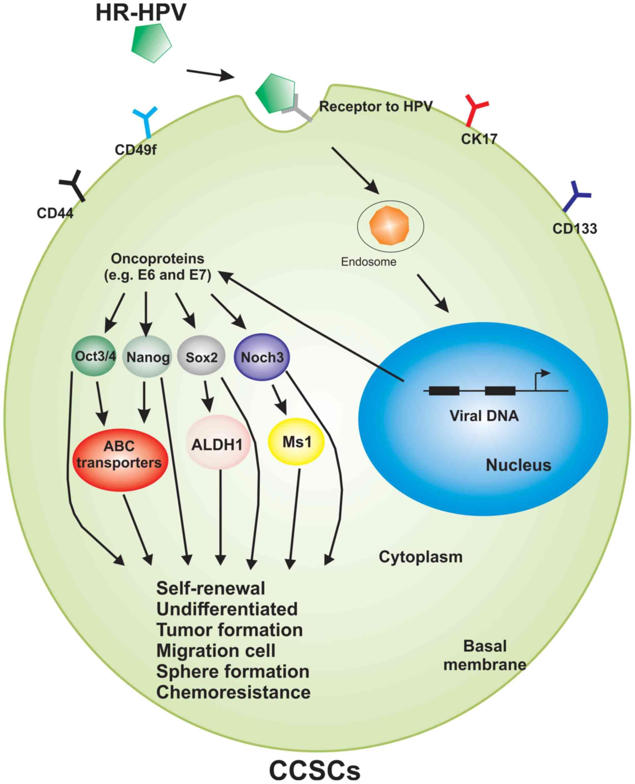 helmintox un alkohols virus del papiloma humano y cancer de piel