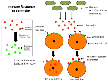 meaning of toxine paraziti intestinali uleiuri esentiale