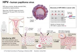 adn hpv genotipare papillomavirus vaccine history