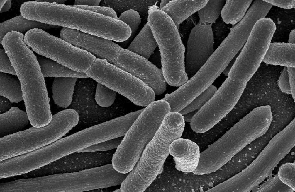 bacterie 8 lettres