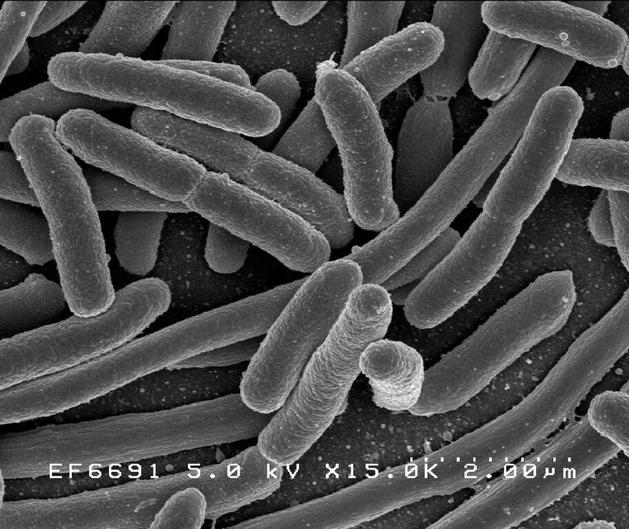 bacterii sediment