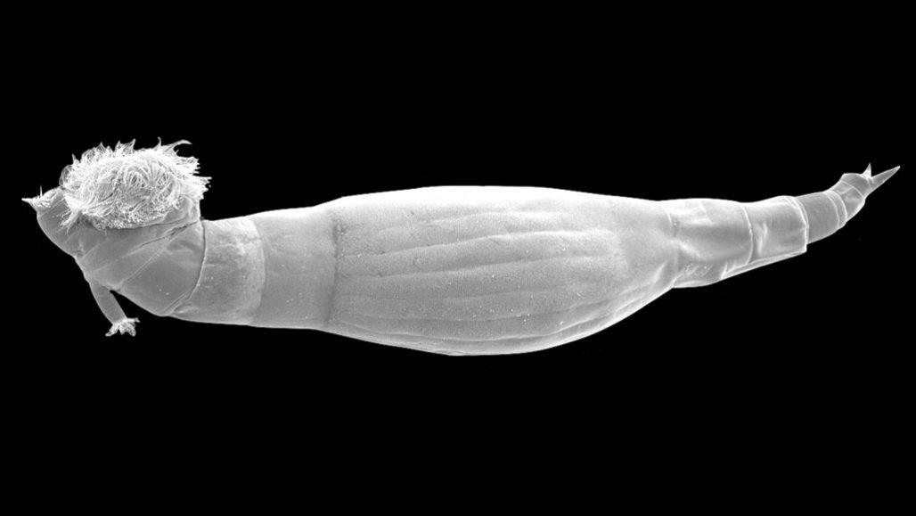 schistosomiasis worm type