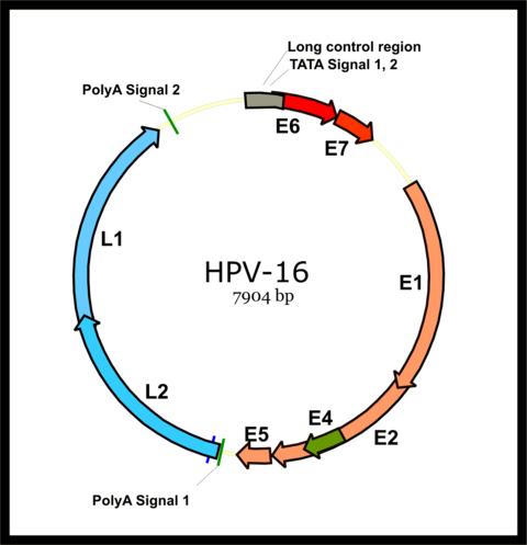 virus papiloma humano cie 10