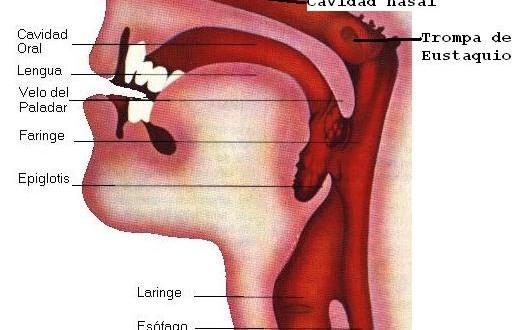 cancer de orofaringe maligno