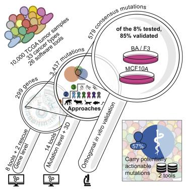 cancer genetic link papiloma humano en genitales