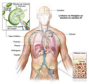 hpv virus smear papilomatosis bovina virus