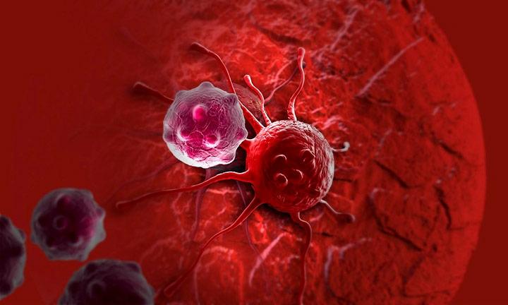 human papillomavirus microbiology helmintox tablets