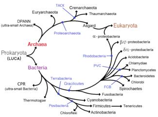 bacterii folositoare exemple