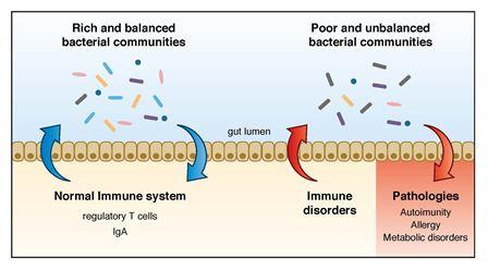 papilloma virus chez les hommes helminth malaria co infection