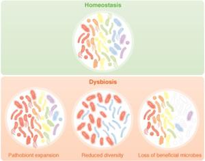 dysbiosis is killing me