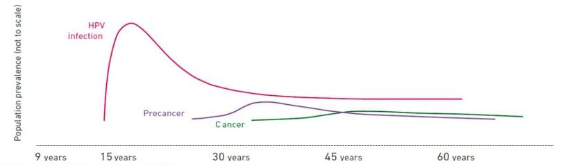 hpv wart virus cervical cancer