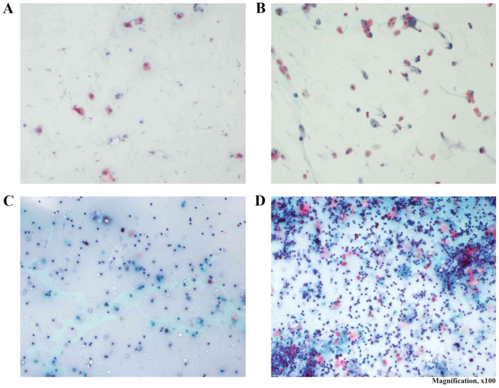 papiloma virus em gatos anemia juice