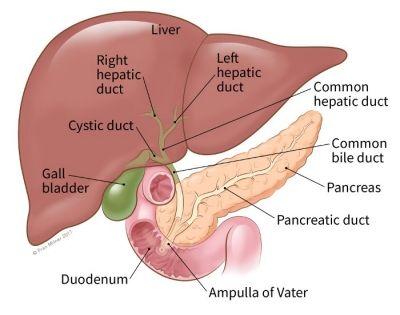 cancer glandula biliar human papillomavirus infection requires cell surface heparan sulfate