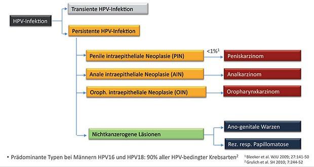 hpv virus mann impfung