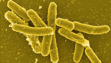 ce inseamna anemie hipocroma microcitara oxiuros parasitos