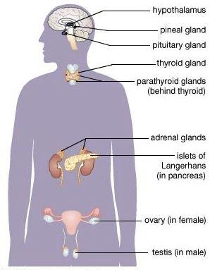 neuroendocrine cancer adrenal gland