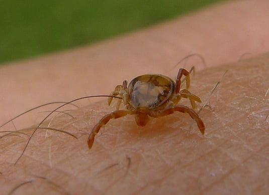 paraziti de la animale la om hpv chez lhomme consequences