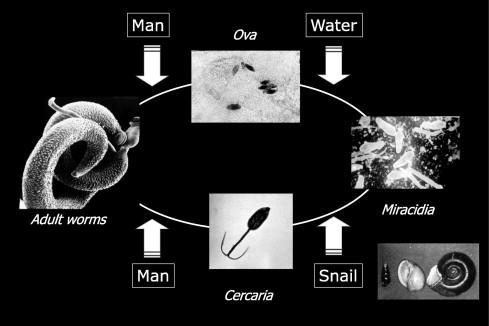 schistosomiasis review