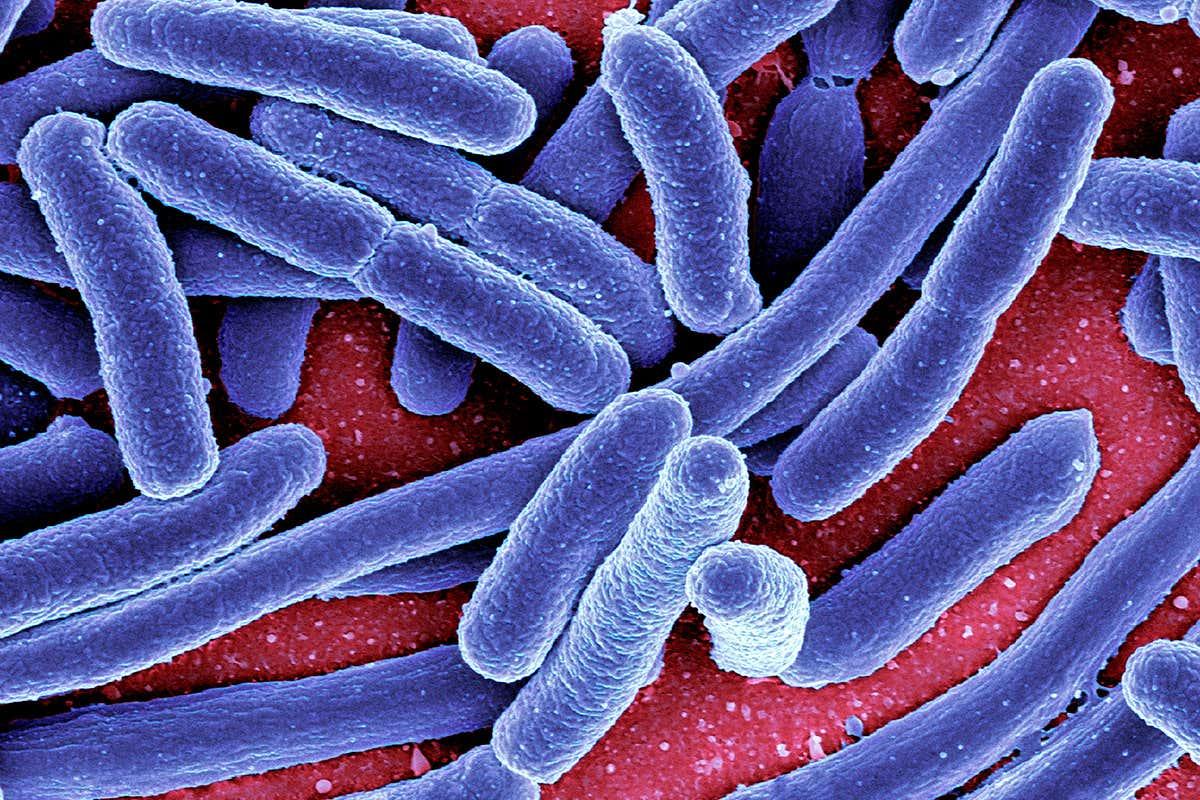 virus hpv rimedi naturali cuales son los sintomas del papiloma humano en el ano