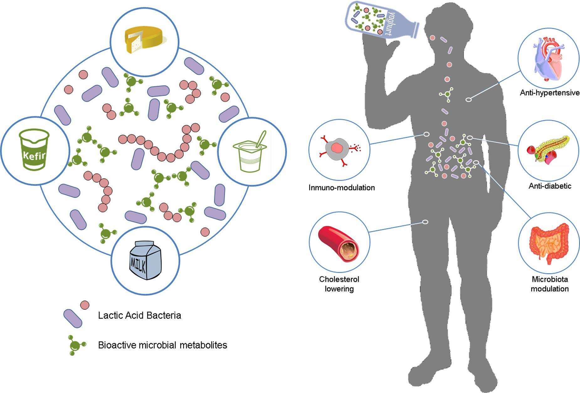 yoghurt bacteria human papillomavirus in keratoacanthoma